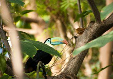 Kolumbien Rundreisen und Baden - Tukan im Amazonas