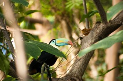 Kolumbien Rundreisen - Tukan im kolumbianischen Amazonas
