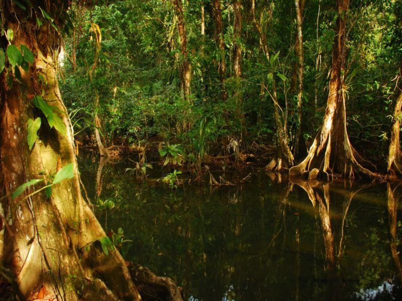 Dschungel Nuqui