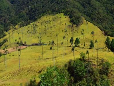 Kolumbien Sehenswürdigkeit Cocora Tal