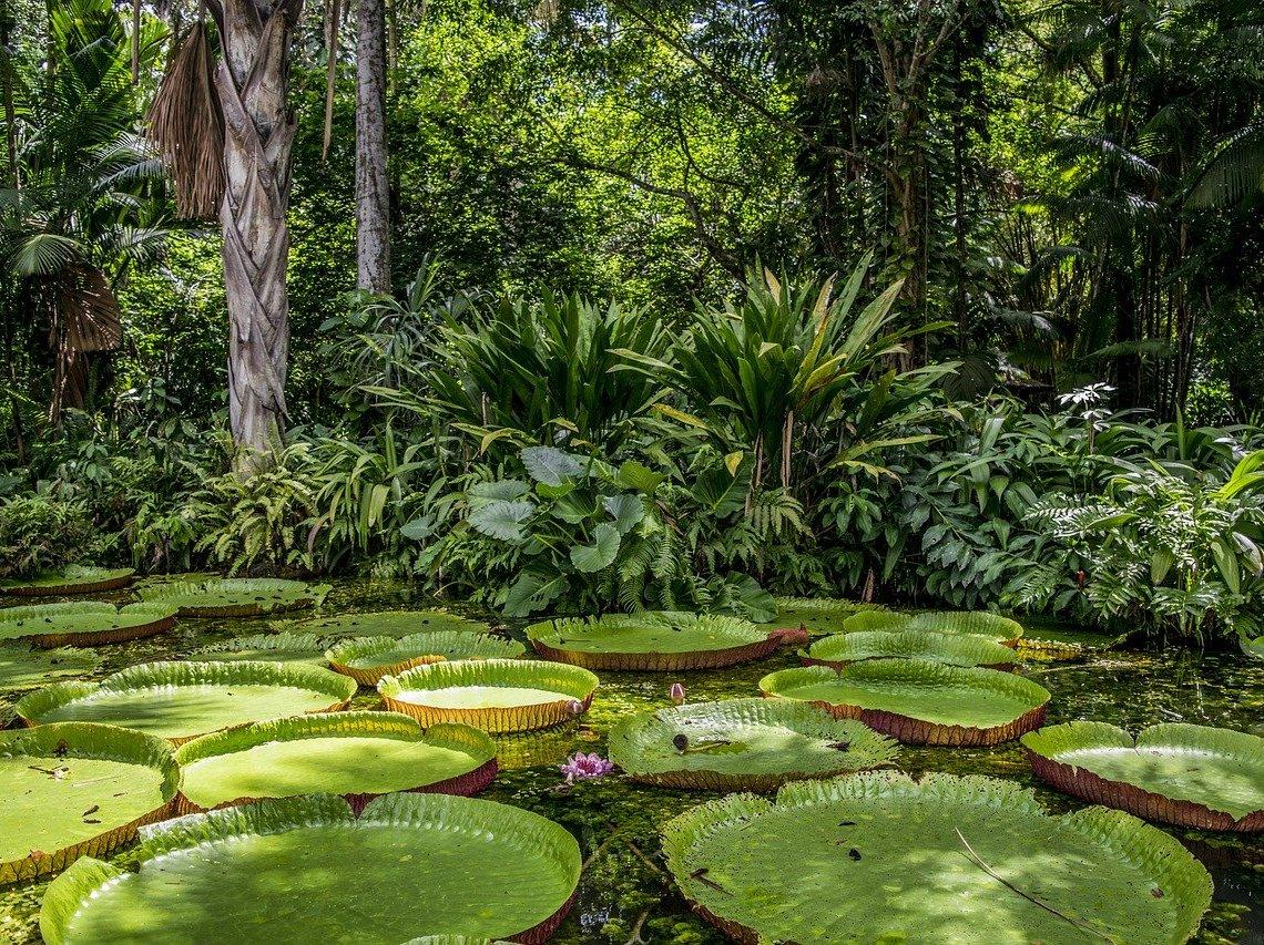 Leticias im Amazonas von Kolumbien