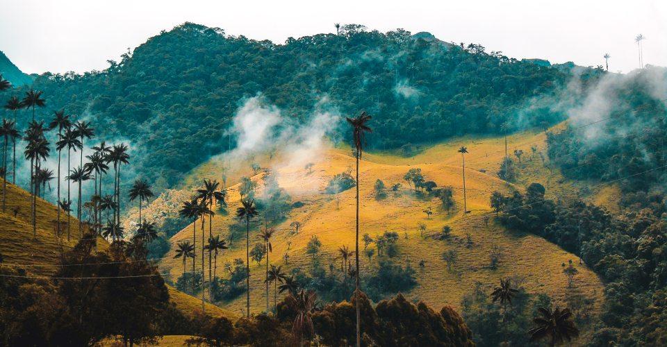 Kolumbien Touren - Ausflüge Cocora Tal
